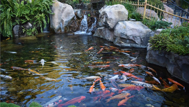 Water Features - Koi Ponds Photo 1