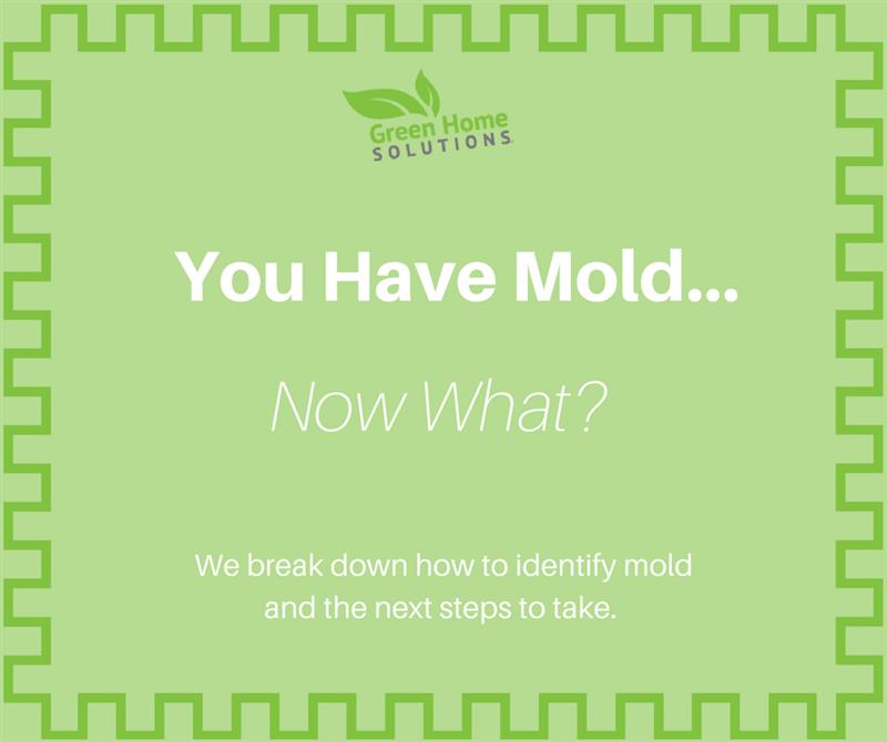 I Have a Mold Problem. What Do I Do Next?