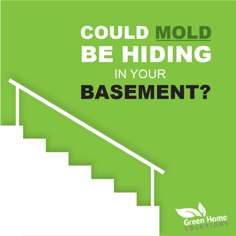 What is Hiding in Your Basement!?
