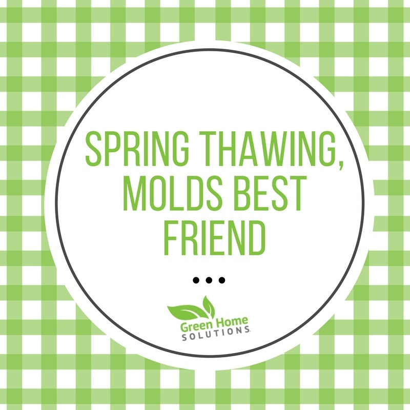 Spring Thawing, Mold's Best Friend