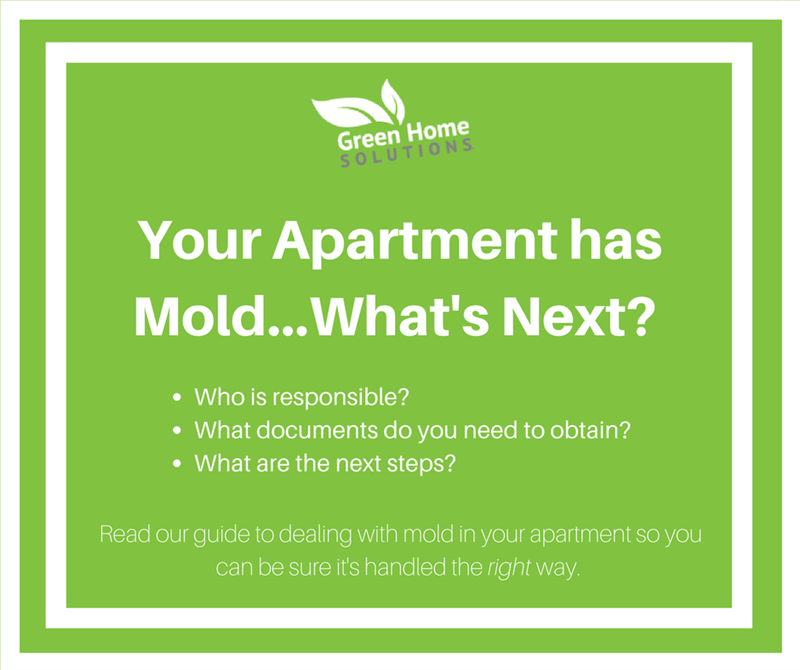 My Apartment Has Mold.. What Next?
